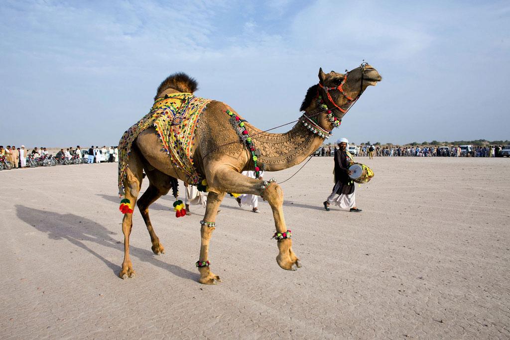 Bikaner Camel Festival, dedicado ao navio do deserto